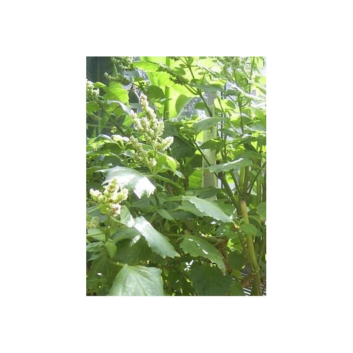 Mundfrisch-Spray 30ml